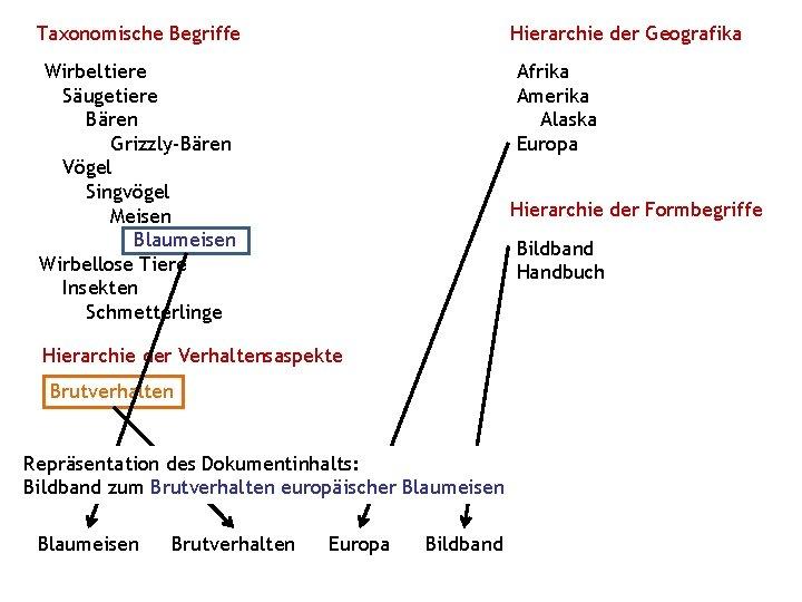 Taxonomische Begriffe Hierarchie der Geografika Wirbeltiere Säugetiere Bären Grizzly-Bären Vögel Singvögel Meisen Blaumeisen Wirbellose