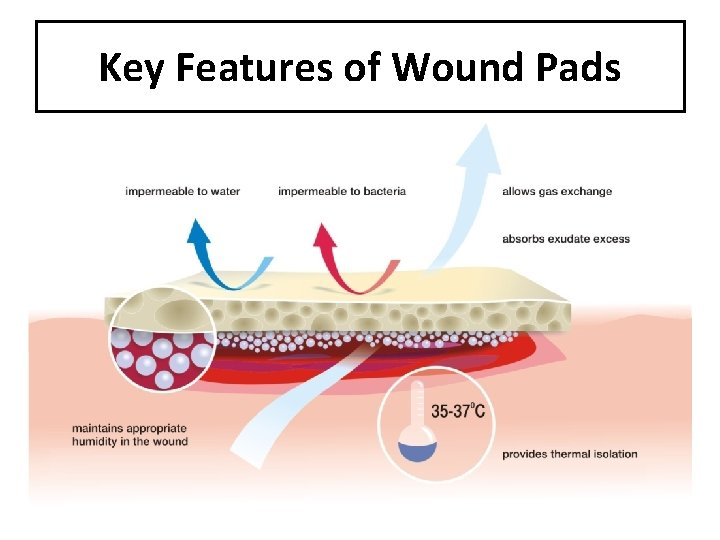 Key Features of Wound Pads