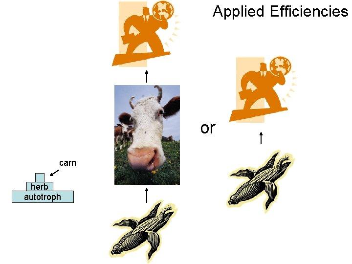 Applied Efficiencies or carn herb autotroph