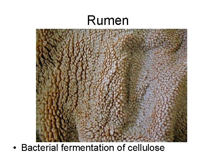 Rumen • Bacterial fermentation of cellulose
