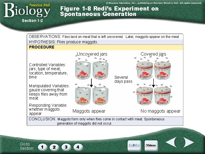 Figure 1 -8 Redi's Experiment on Spontaneous Generation Section 1 -2 OBSERVATIONS: Flies land