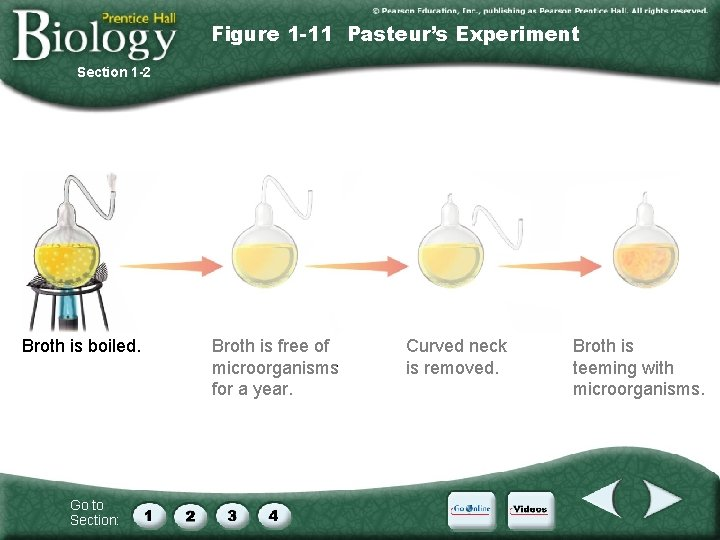 Figure 1 -11 Pasteur's Experiment Section 1 -2 Broth is boiled. Go to Section: