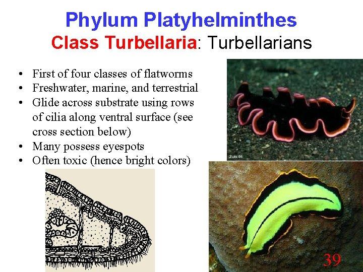 biologie phylum platyhelminthes pastile pentru viermi pentru copii