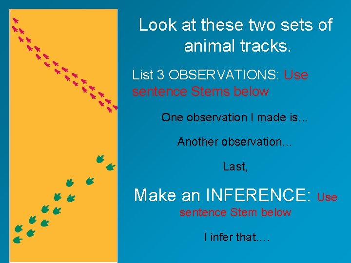 Look at these two sets of animal tracks. List 3 OBSERVATIONS: Use sentence Stems