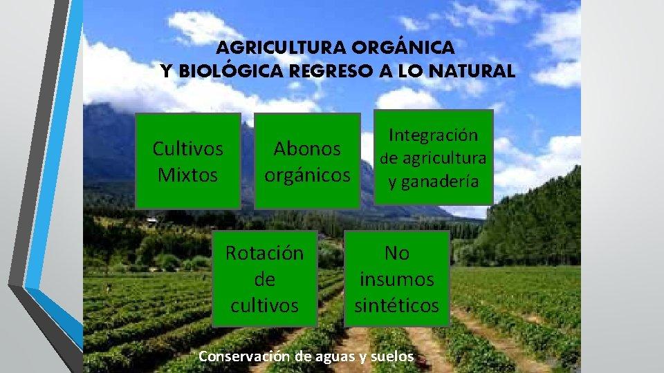 AGRICULTURA ORGÁNICA Y BIOLÓGICA REGRESO A LO NATURAL Cultivos Mixtos Abonos orgánicos Rotación de