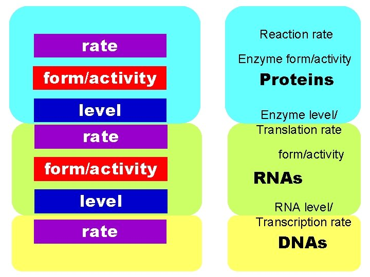 rate form/activity level rate Reaction rate Enzyme form/activity Proteins Enzyme level/ Translation rate form/activity