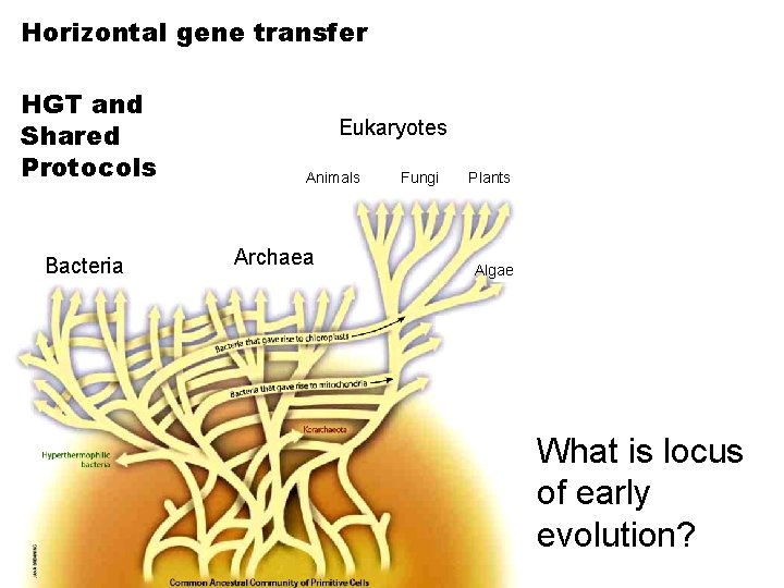 Horizontal gene transfer HGT and Shared Protocols Bacteria Eukaryotes Animals Archaea Fungi Plants Algae