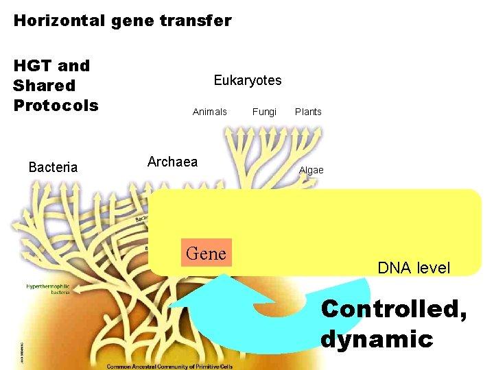 Horizontal gene transfer HGT and Shared Protocols Bacteria Eukaryotes Animals Archaea Gene Fungi Plants