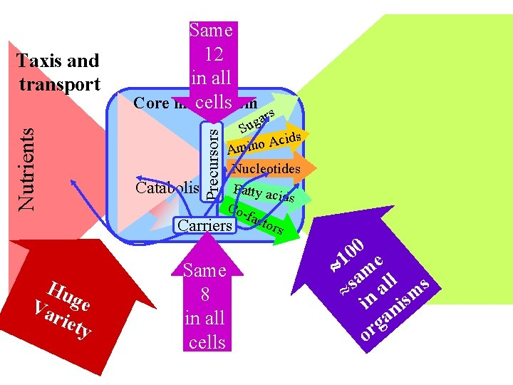 Hu Va ge riet y Precursors Nutrients Taxis and transport Same 12 in all