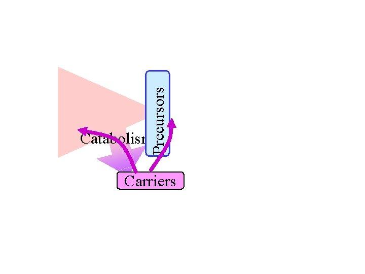 Precursors Catabolism Carriers
