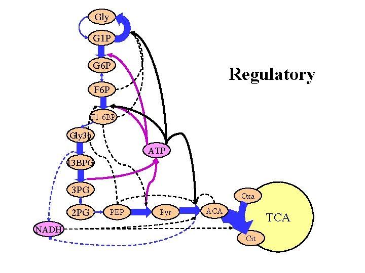Gly G 1 P G 6 P Regulatory F 6 P F 1 -6
