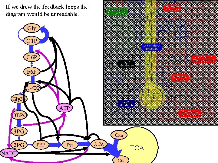 If we drew the feedback loops the diagram would be unreadable. Gly G 1