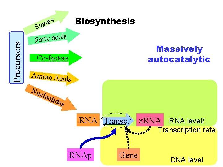 Biosynthesis s Precursors ar g u S Fatty acid s Massively autocatalytic Co-factors Amino