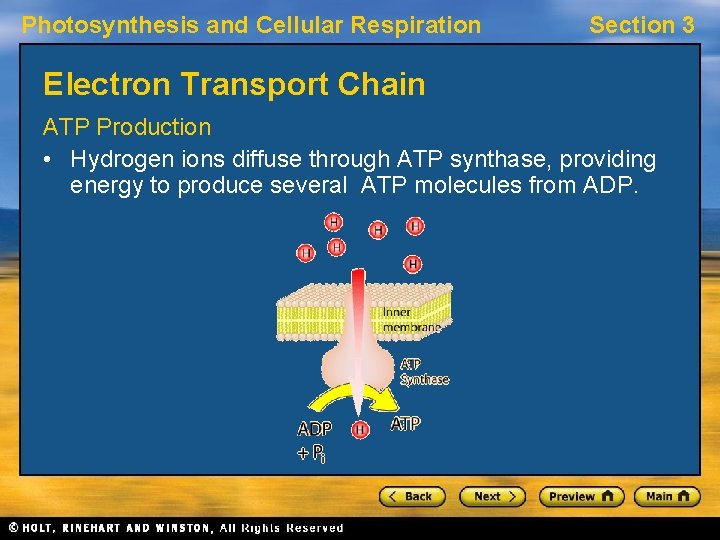 Photosynthesis and Cellular Respiration Section 3 Electron Transport Chain ATP Production • Hydrogen ions