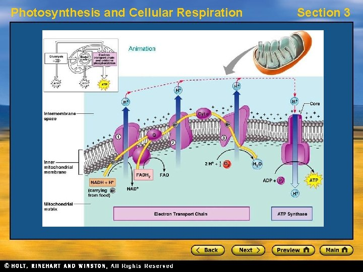 Photosynthesis and Cellular Respiration Section 3