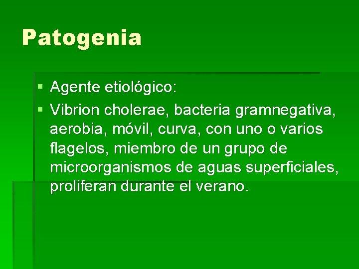 Patogenia § Agente etiológico: § Vibrion cholerae, bacteria gramnegativa, aerobia, móvil, curva, con uno