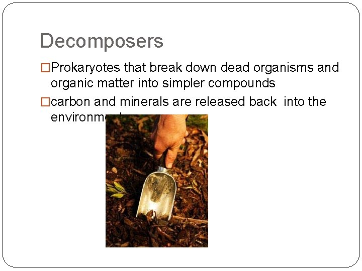 All single celled organisms are prokaryotes