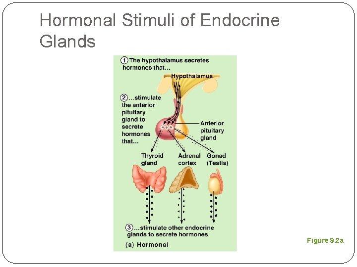 Hormonal Stimuli of Endocrine Glands Figure 9. 2 a