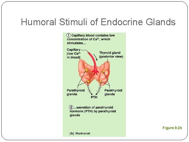 Humoral Stimuli of Endocrine Glands Figure 9. 2 b
