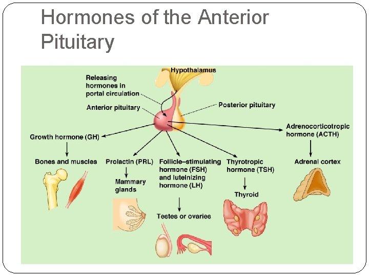 Hormones of the Anterior Pituitary