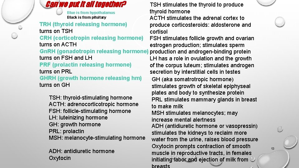 Can we put it all together? TSH stimulates the thyroid to produce thyroid hormone