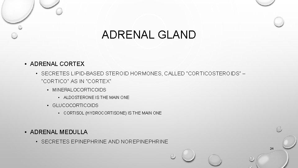 """ADRENAL GLAND • ADRENAL CORTEX • SECRETES LIPID-BASED STEROID HORMONES, CALLED """"CORTICOSTEROIDS"""" – """"CORTICO"""""""
