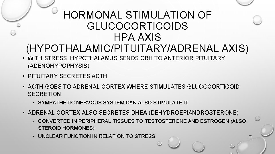 HORMONAL STIMULATION OF GLUCOCORTICOIDS HPA AXIS (HYPOTHALAMIC/PITUITARY/ADRENAL AXIS) • WITH STRESS, HYPOTHALAMUS SENDS CRH