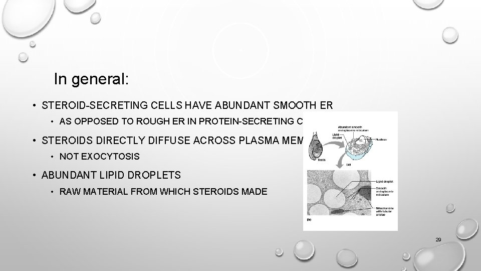 In general: • STEROID-SECRETING CELLS HAVE ABUNDANT SMOOTH ER • AS OPPOSED TO ROUGH
