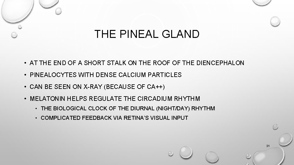 THE PINEAL GLAND • AT THE END OF A SHORT STALK ON THE ROOF