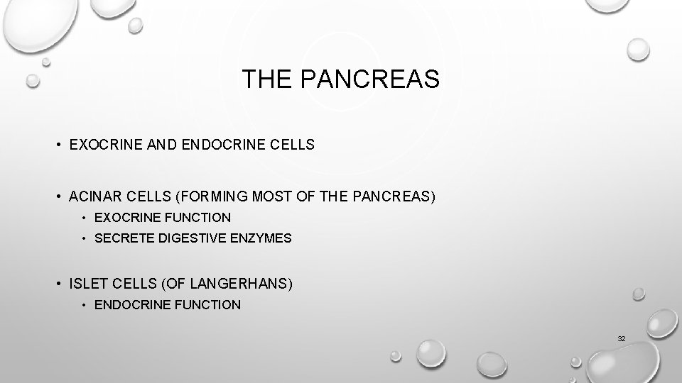 THE PANCREAS • EXOCRINE AND ENDOCRINE CELLS • ACINAR CELLS (FORMING MOST OF THE
