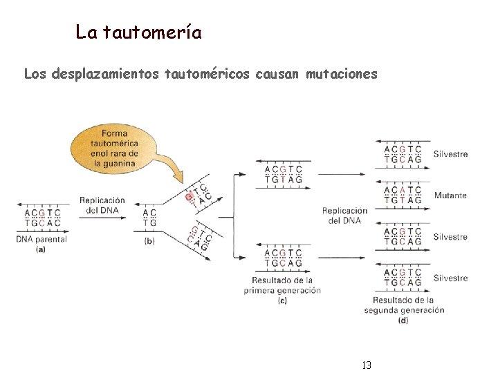 La tautomería Los desplazamientos tautoméricos causan mutaciones 13