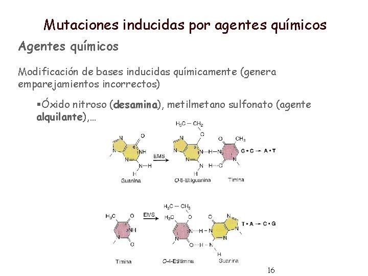 Mutaciones inducidas por agentes químicos Agentes químicos Modificación de bases inducidas químicamente (genera emparejamientos