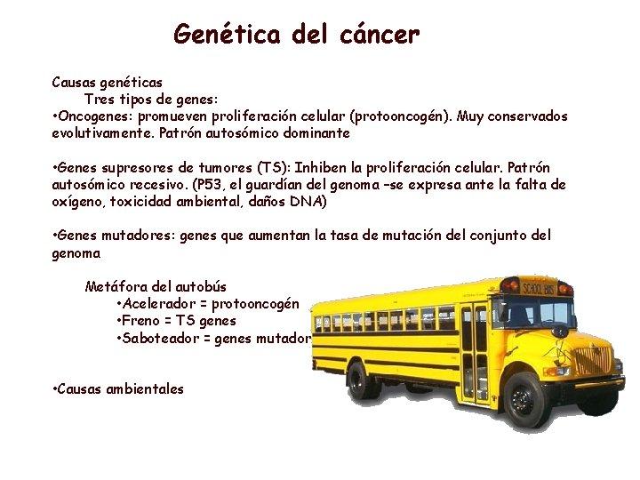 Genética del cáncer Causas genéticas Tres tipos de genes: • Oncogenes: promueven proliferación celular