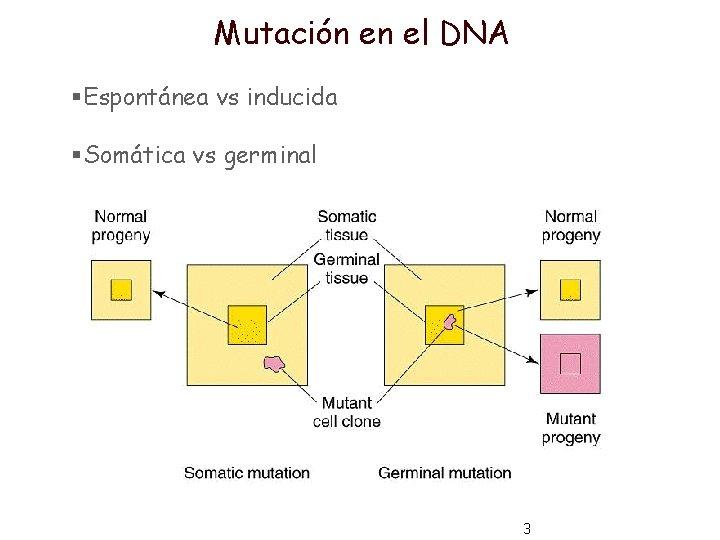 Mutación en el DNA §Espontánea vs inducida §Somática vs germinal 3