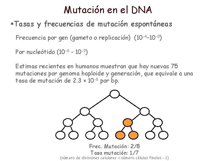 Mutación en el DNA §Tasas y frecuencias de mutación espontáneas Frecuencia por gen (gameto