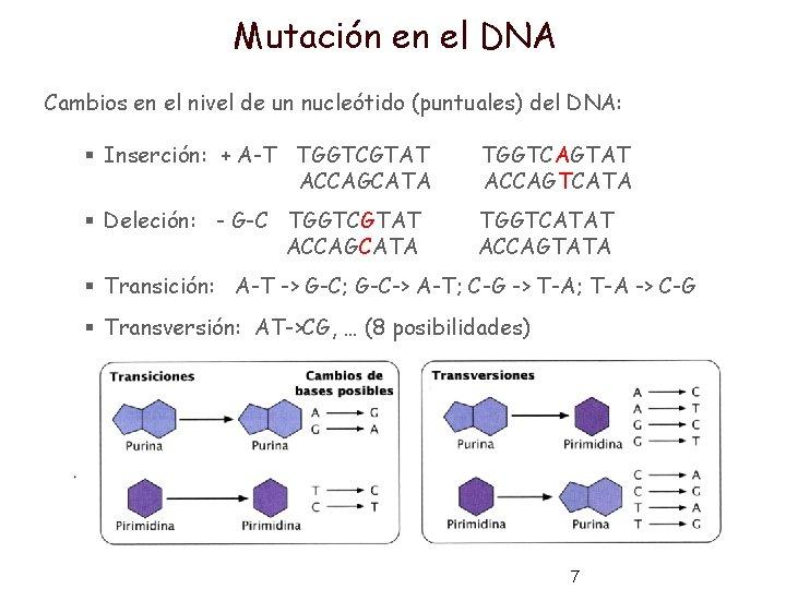 Mutación en el DNA Cambios en el nivel de un nucleótido (puntuales) del DNA:
