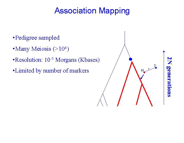 Association Mapping • Pedigree sampled • Many Meiosis (>104) • Limited by number of