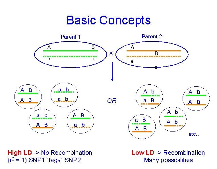 Basic Concepts Parent 2 Parent 1 A B a b A B a b