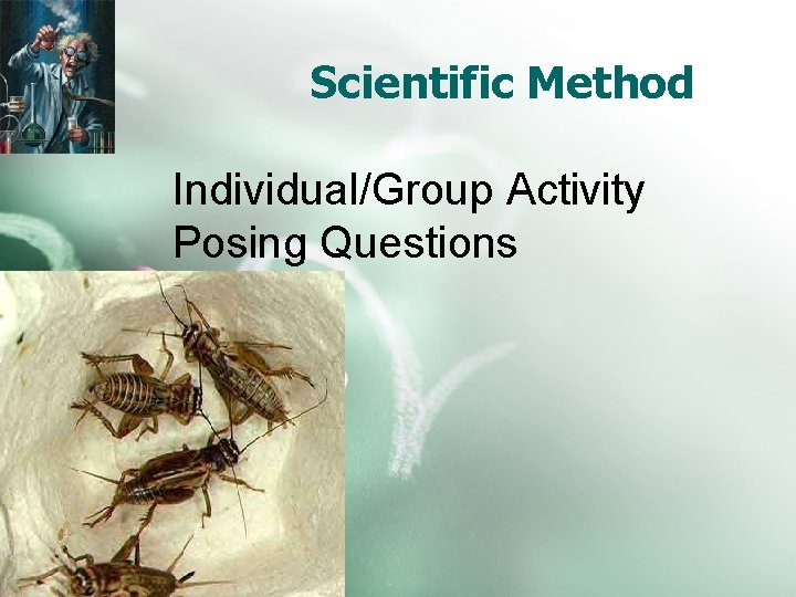 Scientific Method Individual/Group Activity Posing Questions