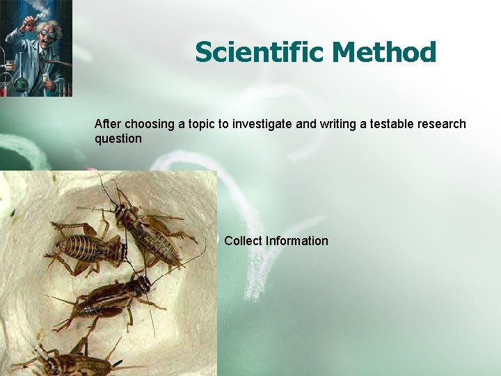 Scientific Method After choosing a topic to investigate and writing a testable research question