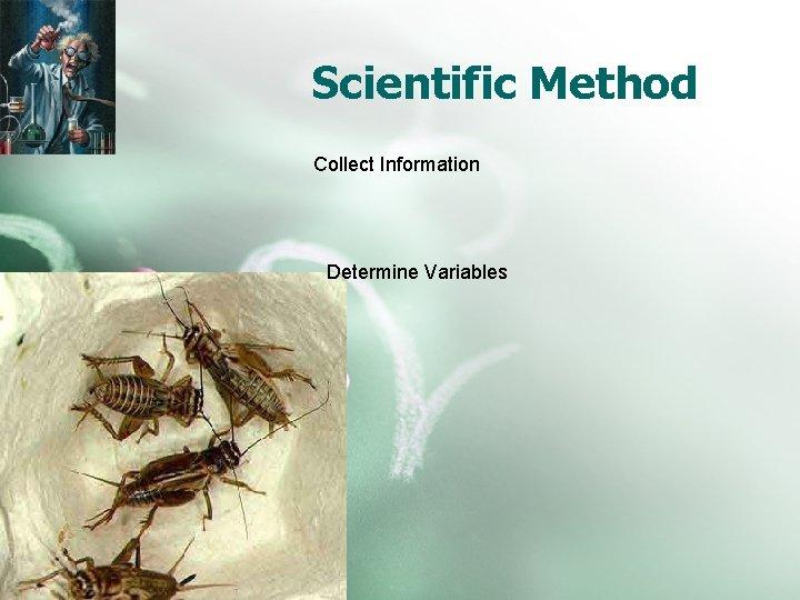 Scientific Method Collect Information Determine Variables
