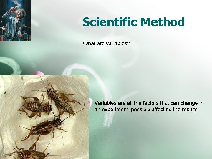 Scientific Method What are variables? Variables are all the factors that can change in