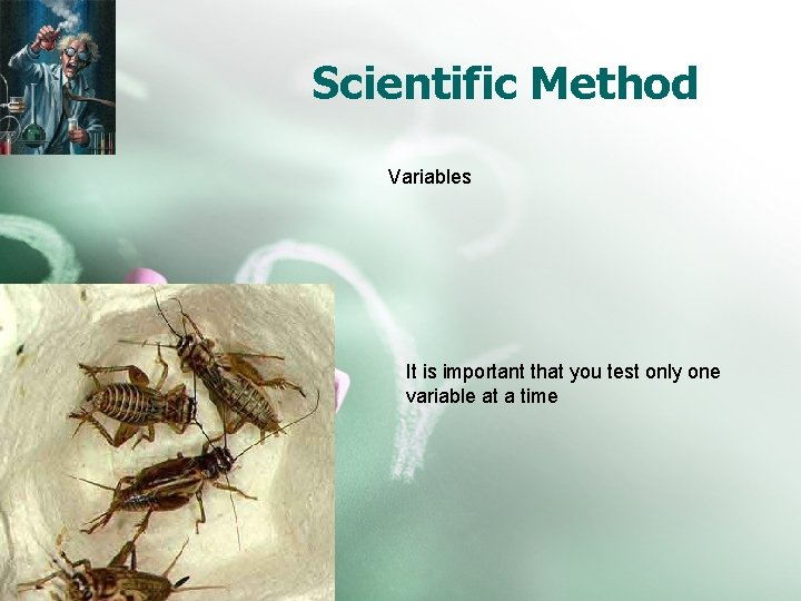 Scientific Method Variables It is important that you test only one variable at a