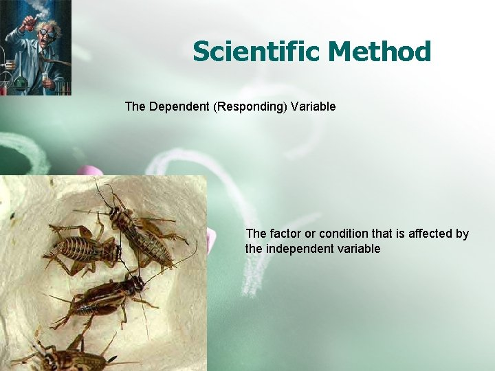 Scientific Method The Dependent (Responding) Variable The factor or condition that is affected by