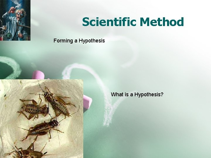 Scientific Method Forming a Hypothesis What is a Hypothesis?