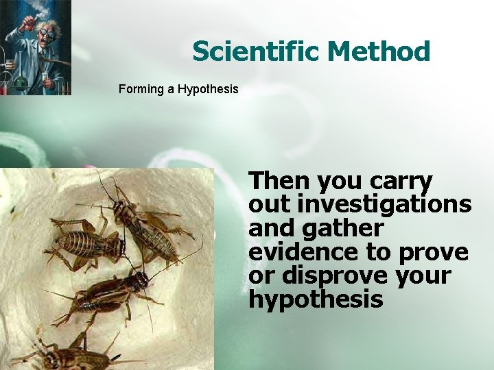 Scientific Method Forming a Hypothesis Then you carry out investigations and gather evidence to