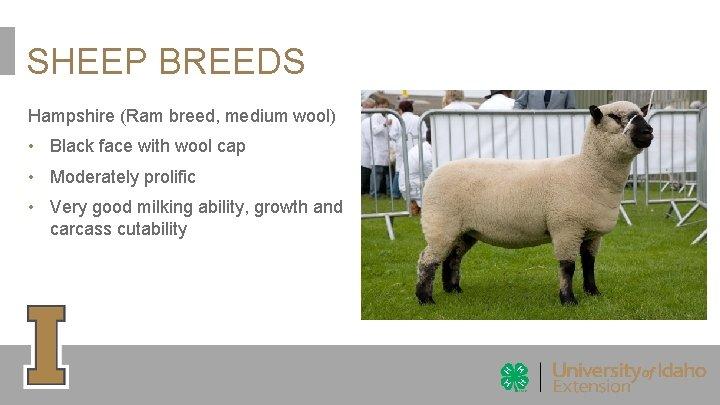 SHEEP BREEDS Hampshire (Ram breed, medium wool) • Black face with wool cap •
