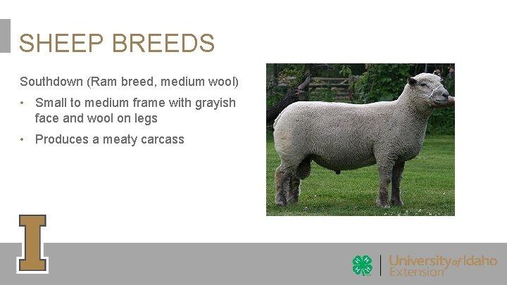 SHEEP BREEDS Southdown (Ram breed, medium wool) • Small to medium frame with grayish