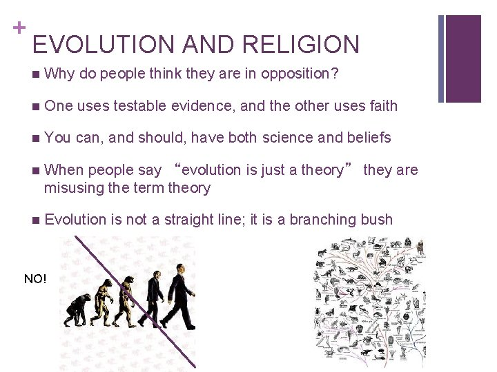 + EVOLUTION AND RELIGION n Why do people think they are in opposition? n