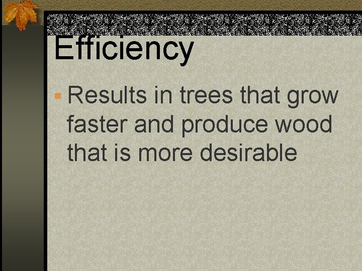 Efficiency § Results in trees that grow faster and produce wood that is more